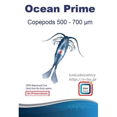画像1: Ocean Prime Copepods500-700ミクロン