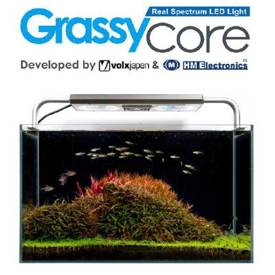 画像1: 【取寄】Grassy Core Fresh グラッシーコアフレッシュ
