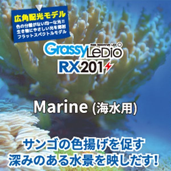 画像2: 【取寄】Grassy Ledio RX201 Marine(海水用)