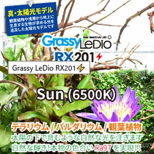 画像2: 【取寄】Grassy Ledio RX201 Sun(65000K)